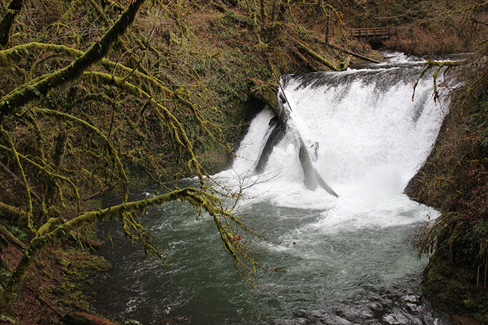 Lower North Falls, Trail of 10 Falls, Silver Falls State Park, Oregon