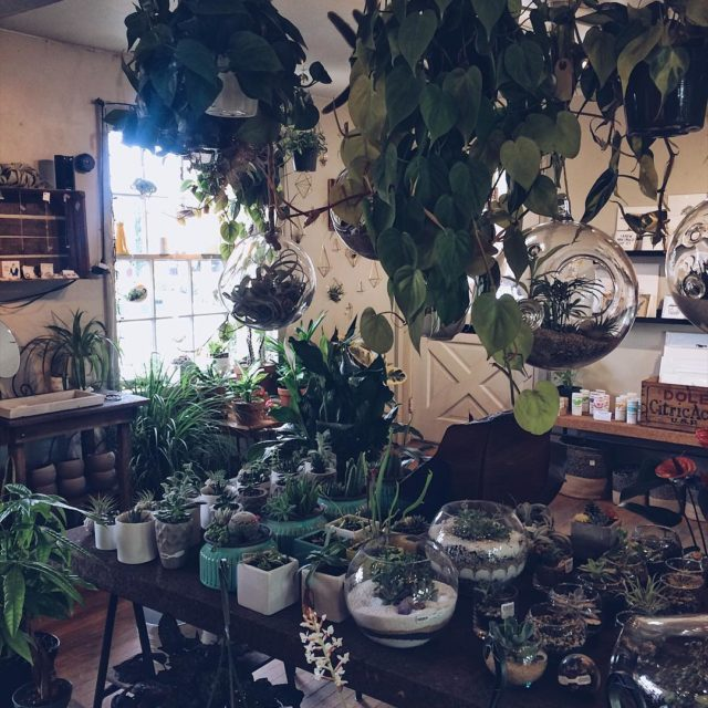 Its hard not to want to buy all the plantshellip