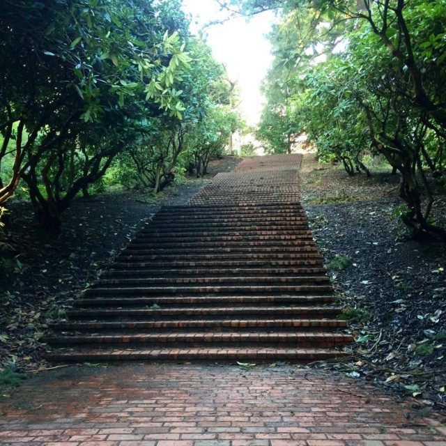 Joined all the other runners in tackling these stairs ahellip