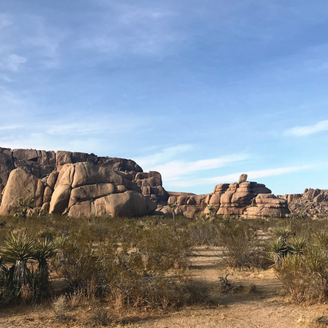 Drove around Joshua Tree for a bit before heading backhellip